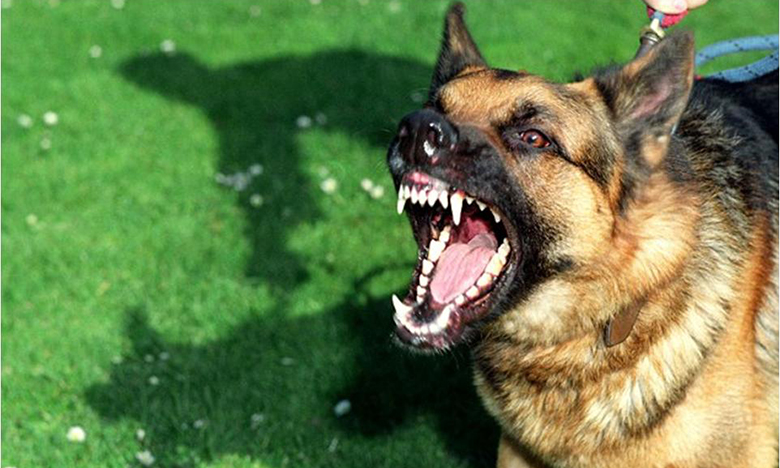 agoura hills dog bite attorneys